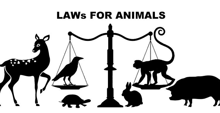 Animal Laws in India that Every Citizen should KnowSource:Unknown